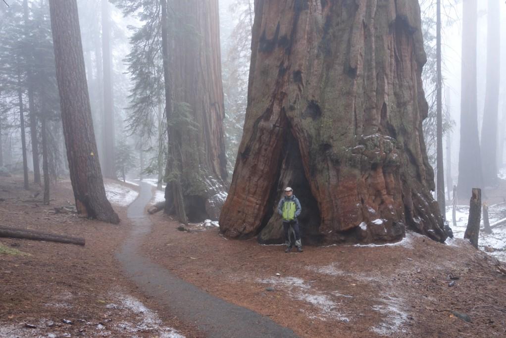 Bezejmený strom